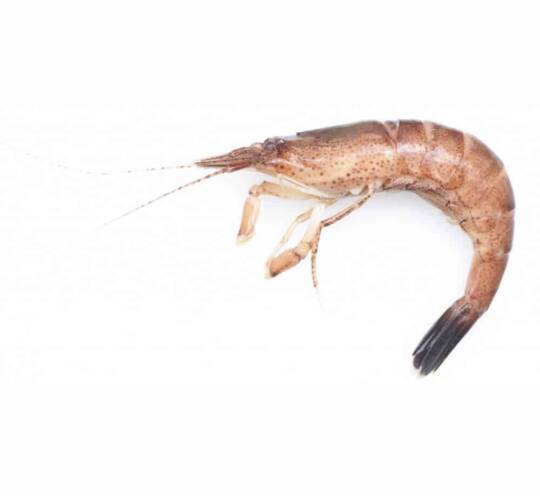 verse garnalen kopen vishandel oostende neptunus