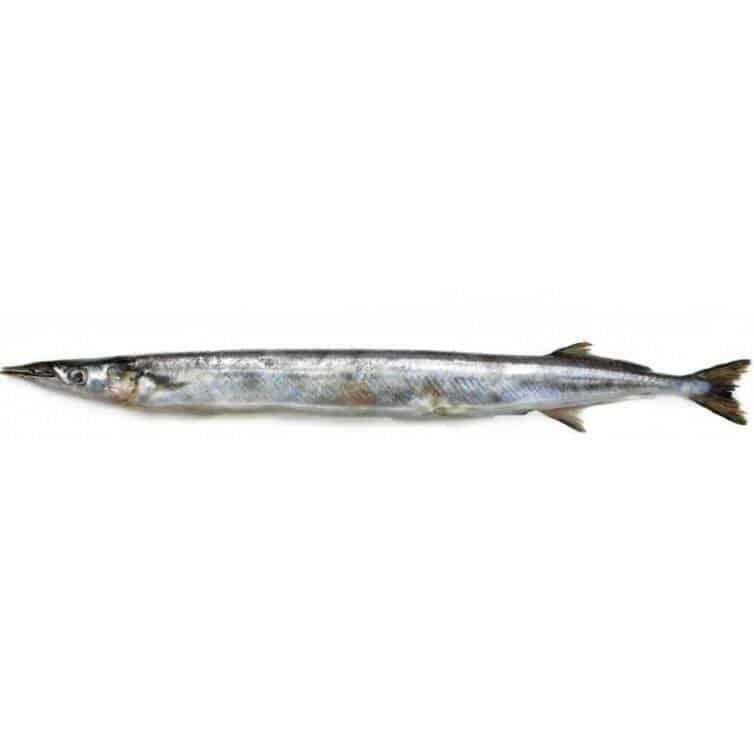 verse geep kopen vishandel oostende neptunus