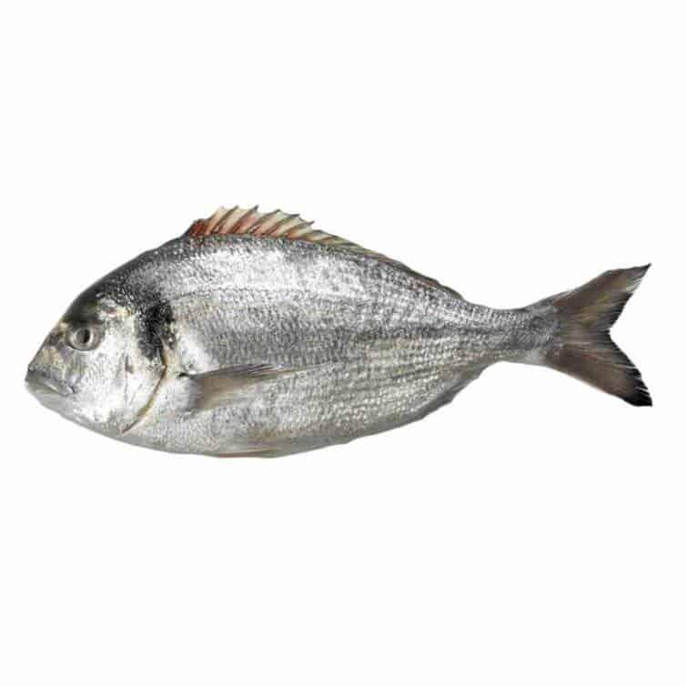 verse goudbrasem kopen vishandel oostende neptunus