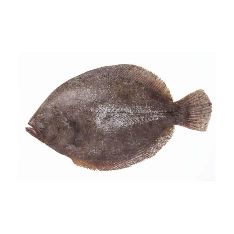 verse griet kopen vishandel oostende neptunus