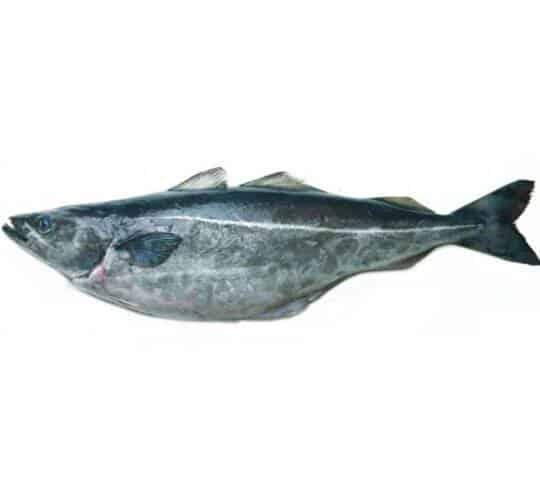 verse koolvis kopen vishandel oostende neptunus