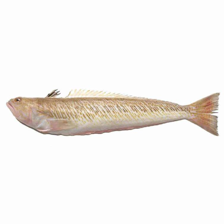 verse pieterman kopen vishandel oostende neptunus