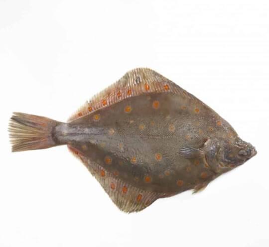 verse pladijs kopen vishandel oostende neptunus