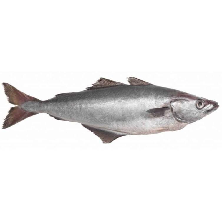 verse pollak kopen vishandel oostende neptunus