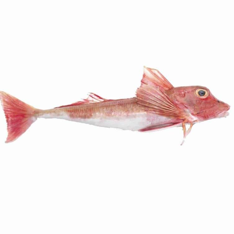 verse rode poon kopen vishandel oostende neptunus