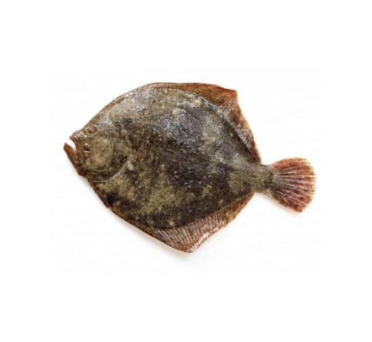 verse tarbot kopen vishandel oostende neptunus