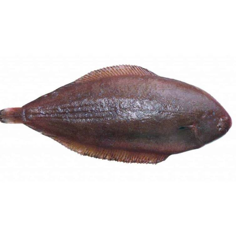 verse tong kopen vishandel oostende neptunus