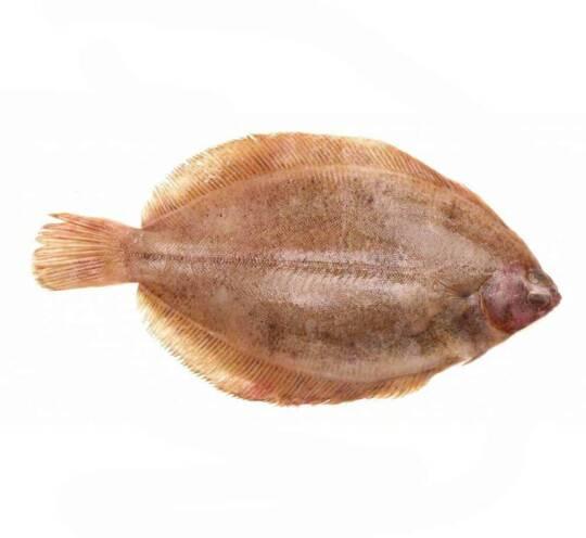 verse tongschar kopen vishandel oostende neptunus