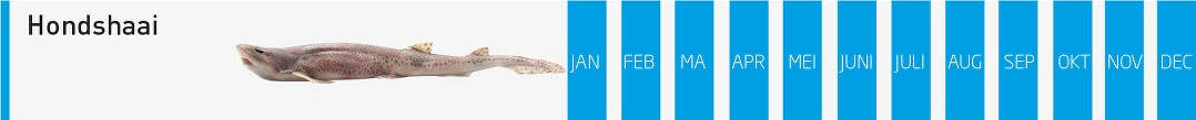 verse-vis-hondshaai-vangstmaanden-visgroothandel-neptunus-oostende