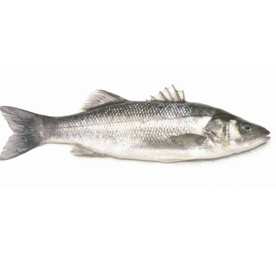 verse zeebaars kopen vishandel oostende neptunus