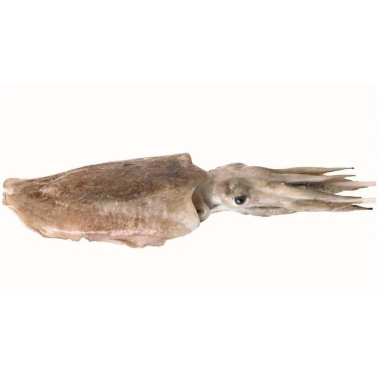 verse zeekat kopen vishandel oostende neptunus