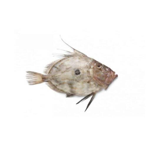 verse zonnevis kopen vishandel oostende neptunus