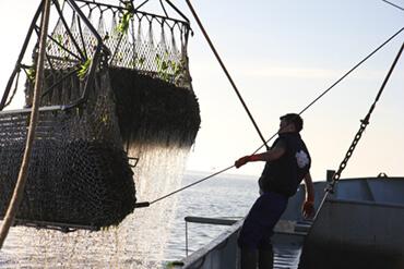 verse mosselen vangst- voor groothandel neptunus